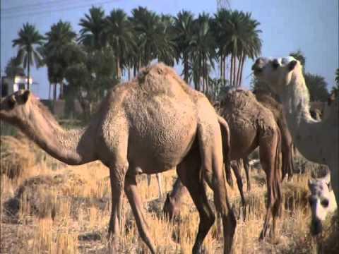 Iraq - Life of Civilization