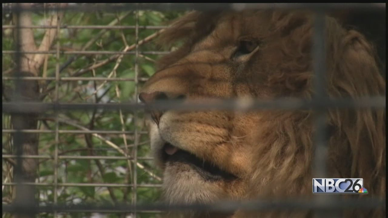 should people be allowed to keep exotic pets Not good pets paws believes that exotic animals should not be read other harrowing stories about exotic animals harming people to keep the animals.