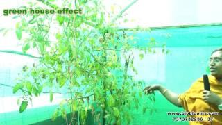 growing tomatos in green house vegetable gardening tips