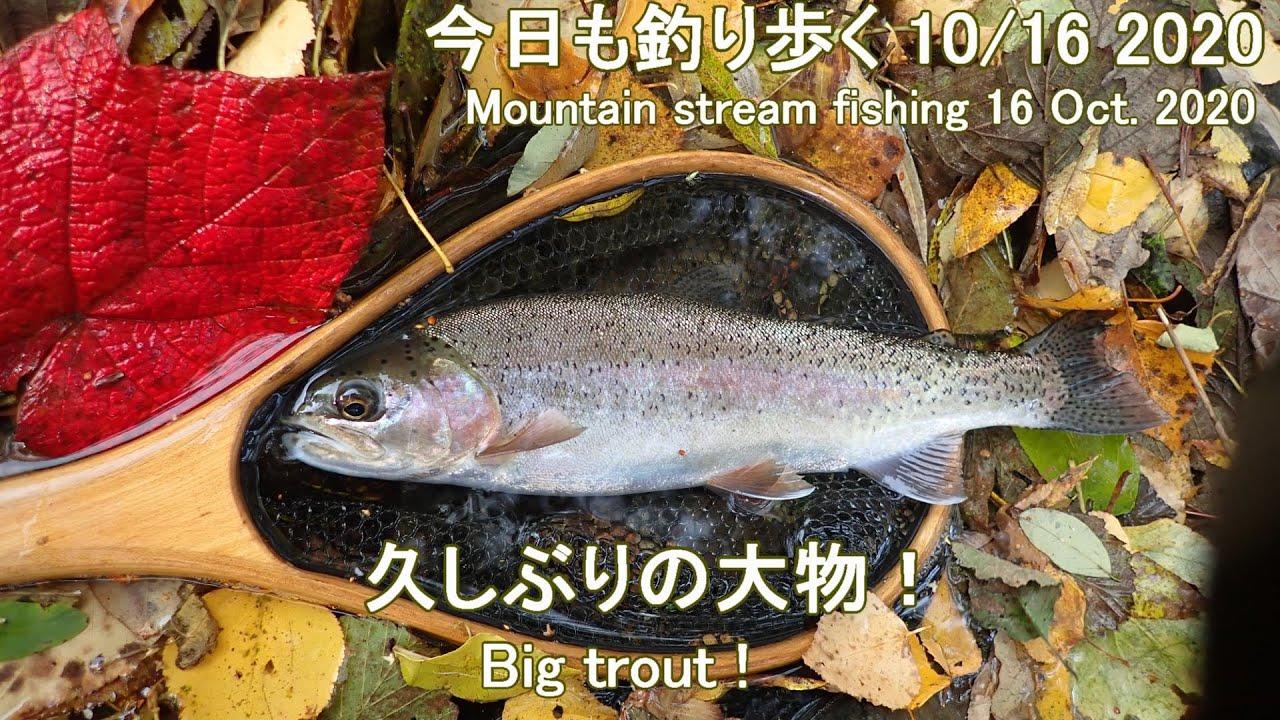 今日も釣り歩く(10/16 2020)  久しぶの大物! (Mountain stream fishing 16 Oct. 2020)