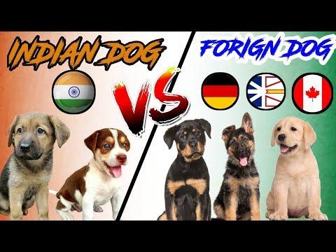 INDIAN Dog Breeds VS FOREIGN Dog Breeds | In Hindi | COMPARISON | DOG VS DOG