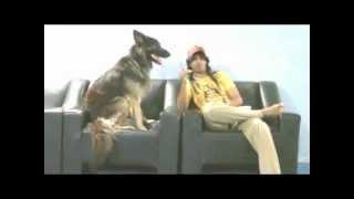 Abdullah Minor  تعليم الكلب على الهجوم