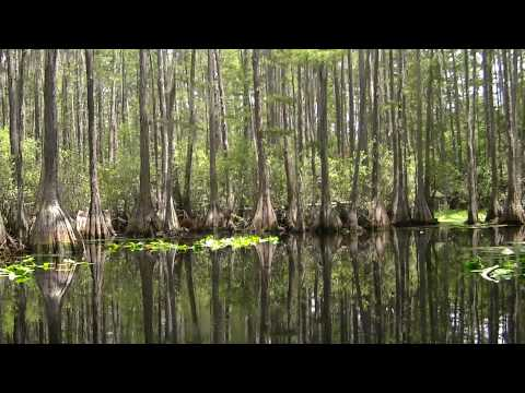 Cruising in the Okefenokee Swamp at Stephen Foster State Park outside Fargo, Ga.  00009.mts