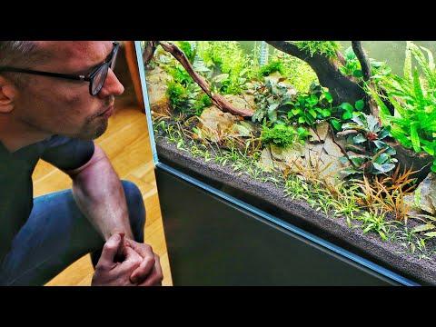 Nature Aquarium Aquascape - Aquascaper 600 - 2 month BIG update