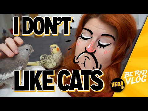 I Don't Like Cats / VEDA 16