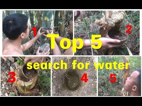 Primitive technology: Top 5 search for water in the forest for survival