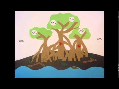 Mangroves and their ecosystem services - Stop motion