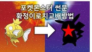 [썬문]잉어킹을 이용한 확정이로치교배방법