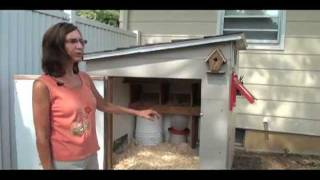 Backyard Chickens: Coop Design