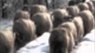 Romanian Folksongs by Bela Bartok - Ana-Maria Avram