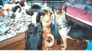 «мои собаки» под музыку Dooplett   Хатико  Picrolla