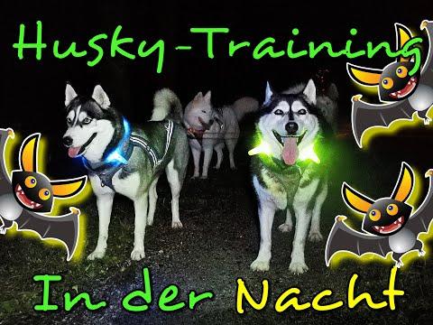 Zughundesport nachts /