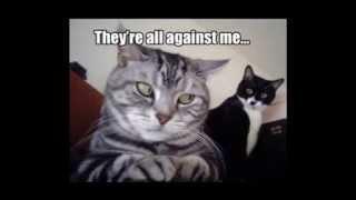 おもしろ猫のクリップです。英語字幕ですが見てるだけでもけっこう笑え...