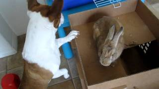 Our Bunny And Dog Play Hide-and-seek