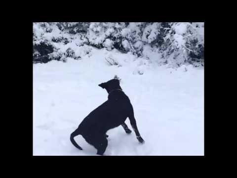 Dog Fail To Catch Snowball