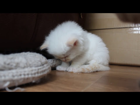 Cute little kitten cant stay awake - SO cute!