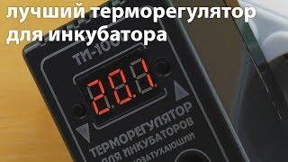 Терморегулятор для инкубатора ТИ-1000  и не только, обзор