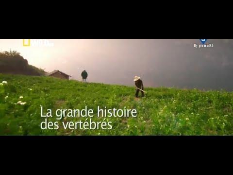 LA GRANDE HISTOIRE DES VERTEBRES -  1/2 - les origines