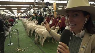 2019 Royal Show TV - School Wethers Presentation