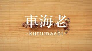 車海老(くるまえび)のさばき方 - How to filet Japanese tiger prawn -|日本さばけるプロジェクト
