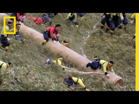 Riding Giant Logs In Japans Dangerous  Year Old Festival Short Film Showcase