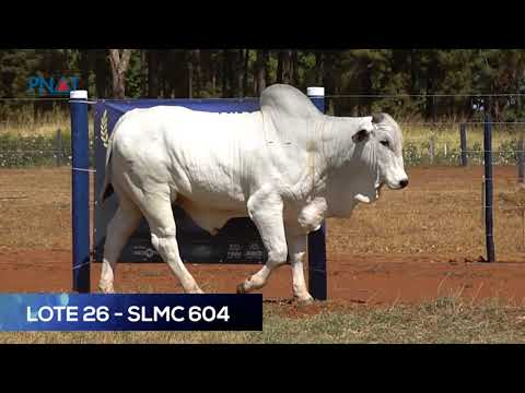 LOTE 26 - SLMC604 - NELORE