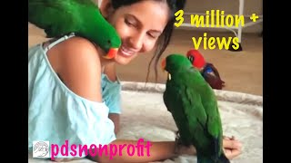 Aeriana and her eclectus family... Fourth of July special