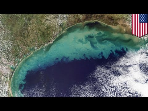 Gulf of Mexico 'dead zone' forecasted to be as big as Connecticut, study shows - TomoNews