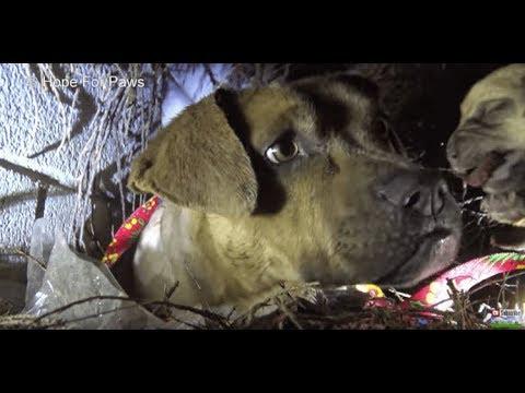 ★ Спасатель осторожно взял щенка и потащил наружу, прочь из импровизированного логова.