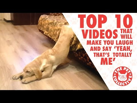 Top 10 Animal Videos That Will Make You Laugh and Say 'Yeah, that's totally me'