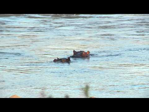 Bijzondere dieren in Malawi-