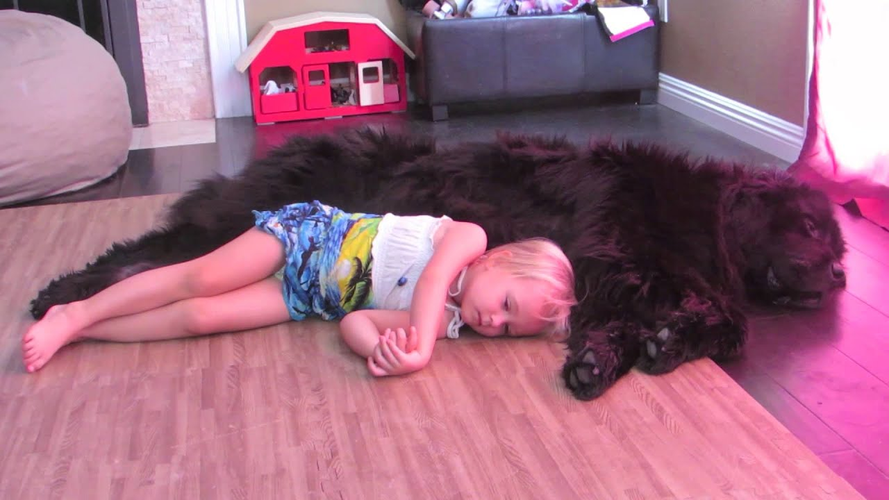 Nap Time For Toddler And Her Puppy YouTube - Toddler naps with puppy