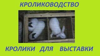 Как мы собираем кроликов для выставки