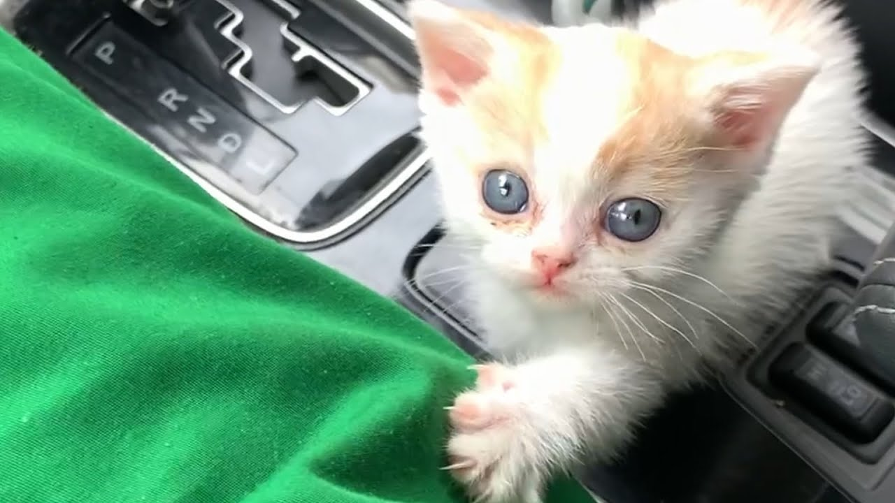"""""""Daddy let me drive while mom is gone!"""" - kitten's reaction to the car"""