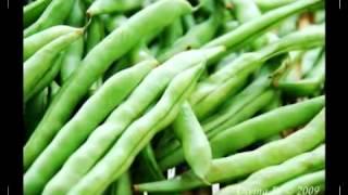 Fagioli Verdi Fornitore Esportatore Fresco Verdure Marocco