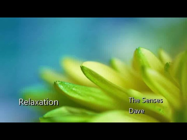 Relaxation - The Senses