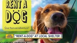 Animal shelter lets you rent a dog for free