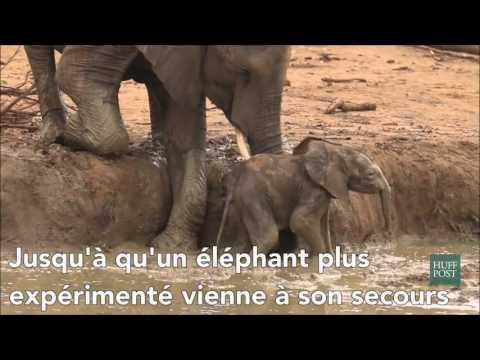 Un éléphanteau ça glisse énormément