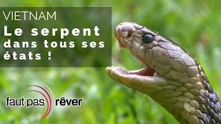 Vietnam - le serpent dans tous ses états - #Faut Pas Rêver