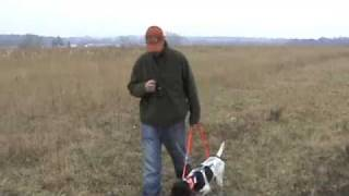 Free Hunting Dog Training Videos - Heel Part 1