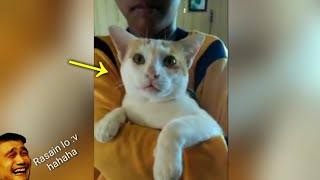 Video Ekspresi lucu kucing saat dimarahin majikannya 😆🙀 - Cat Lovers download MP3, 3GP, MP4, WEBM, AVI, FLV November 2018
