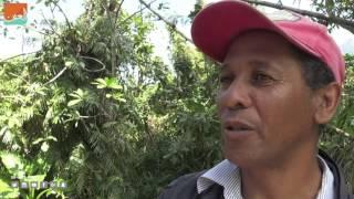 كافيهفن و منوعات  مدغشقر تسعى لحماية الليموريات