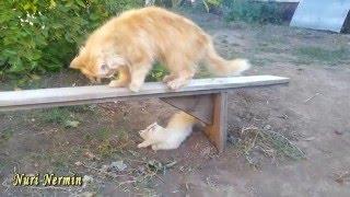 Cмешные маленькие котята играют с мамой кошкой