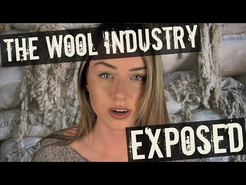The Wool Industry EXPOSED (What They Don't Want You To Know)