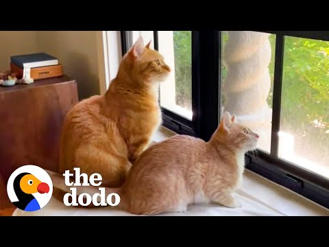 The Struggles Of Growing Up With A Little Brother   The Dodo Cat Crazy
