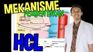 Medical Video Lecture, PHYSIOLOGY: Vasoactive intestinal polypeptide.
