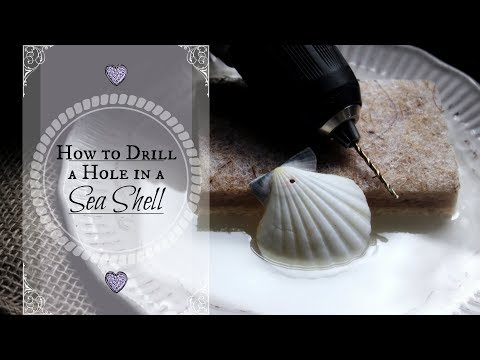 HOW TO DRILL A HOLE IN A SEASHELL ♥ Drilling Holes in Shells Tutorial (Mermaid Crafts for Adults)