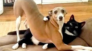 TRY NOT TO LAUGH 🤪 Funniest 🐶 Dogs and 😻 Cats - Awesome Funny Pet Animals Videos 😇 #1