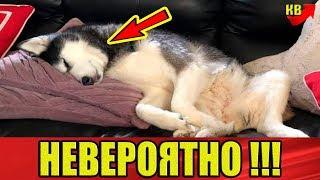 Эта собака ставит диагноз лучше чем врачи. Она трижды спасла жизнь хозяйки.