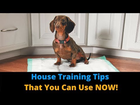 3 Tips To Make House Training Your Dog FASTER! Potty Train Your Dog The Easy Way.